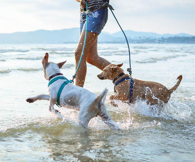Dogs Running In Ocean